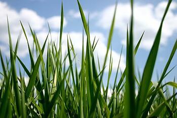 Green Grass