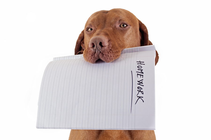 bigstock-The-Dog-Ate-My-Homework-42642301